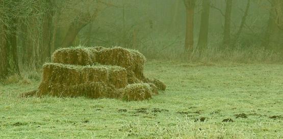Foto van Concessies Hooibeheer of Begrazing/hooien