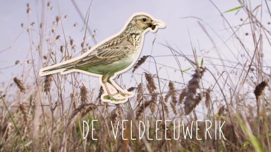 Foto van Nieuwe video: maatregelen voor akkervogels