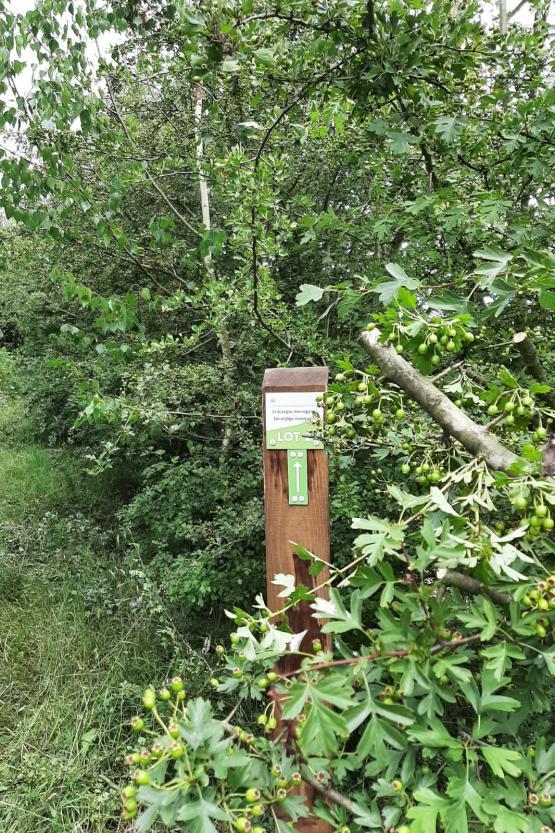 Foto van Succesvolle zaadoogst inheemse bomen en struiken