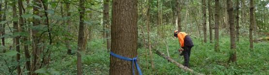 Foto van Jaarverslag FCS-certificering in onze Vlaamse bossen