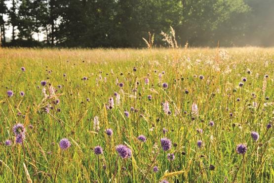 Foto van 7 percelen in concessie in het Hageland voor natuurgericht graslandbeheer