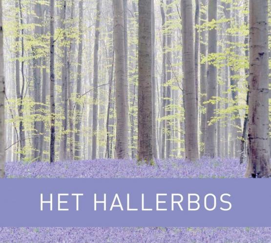 Foto van Cadeautip: het nieuwe boek van het Hallerbos
