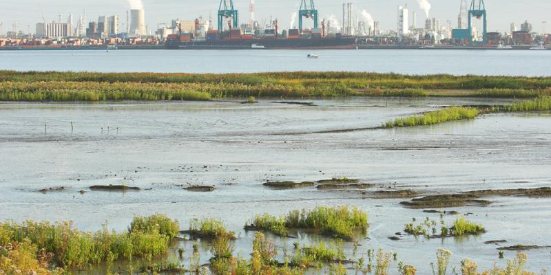 Vacature Expert natuurprojecten haven van Antwerpen
