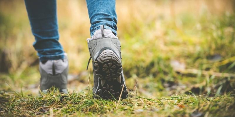 Coachen in de natuur:  Naar een loopbaan die in je natuur ligt