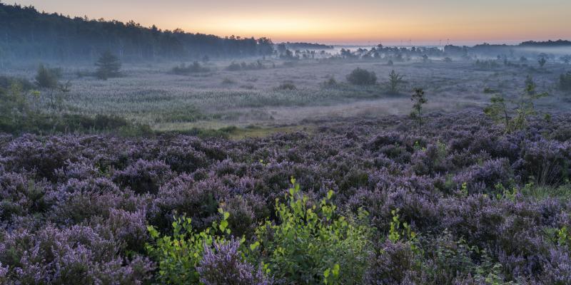 Gezocht: Concessionaris voor Natuurbeheer Hoge Kempen tot Voeren