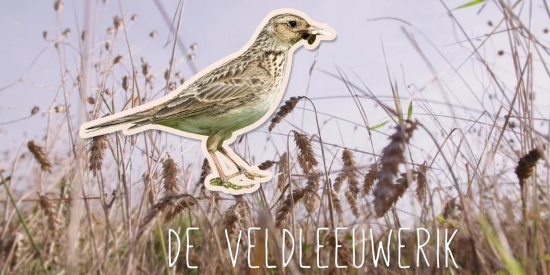 Nieuwe video: maatregelen voor akkervogels