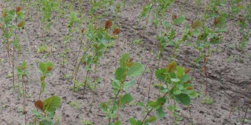 Infosessie Bosplantsoen in Kasteel Groenenberg