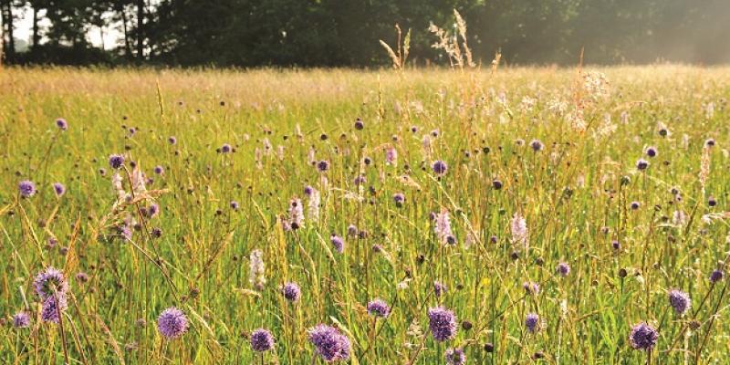7 percelen in concessie in het Hageland voor natuurgericht graslandbeheer