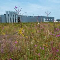 Green Deal bedrijven en biodiversiteit