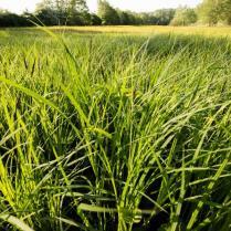 Gezocht: concessionaris voor natuurgericht graslandbeheer