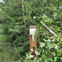 Succesvolle zaadoogst inheemse bomen en struiken