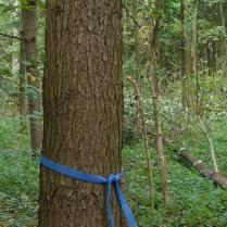 Jaarverslag FCS-certificering in onze Vlaamse bossen