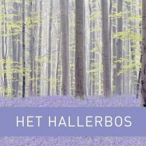 Cadeautip: het nieuwe boek van het Hallerbos