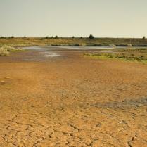Natuurbeheer en klimaat